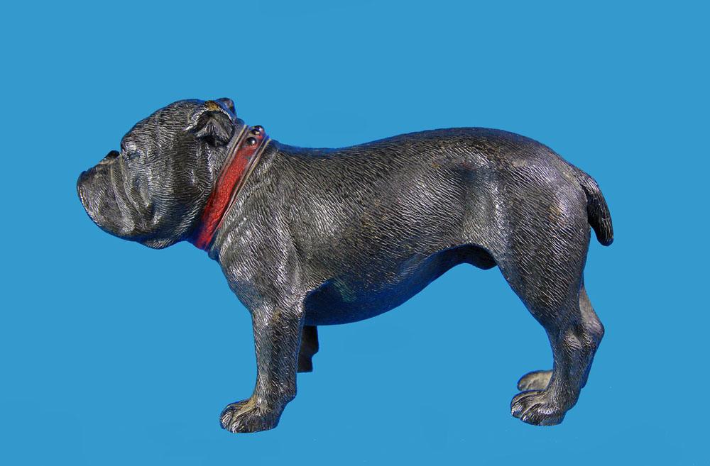 French Bulldog Boston Terrier Very Rare Large Vienna